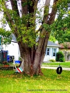 candid shot of neighborhood swings